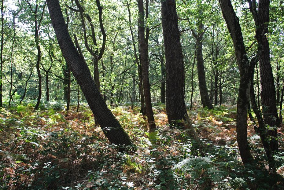 Forêt en Brenne