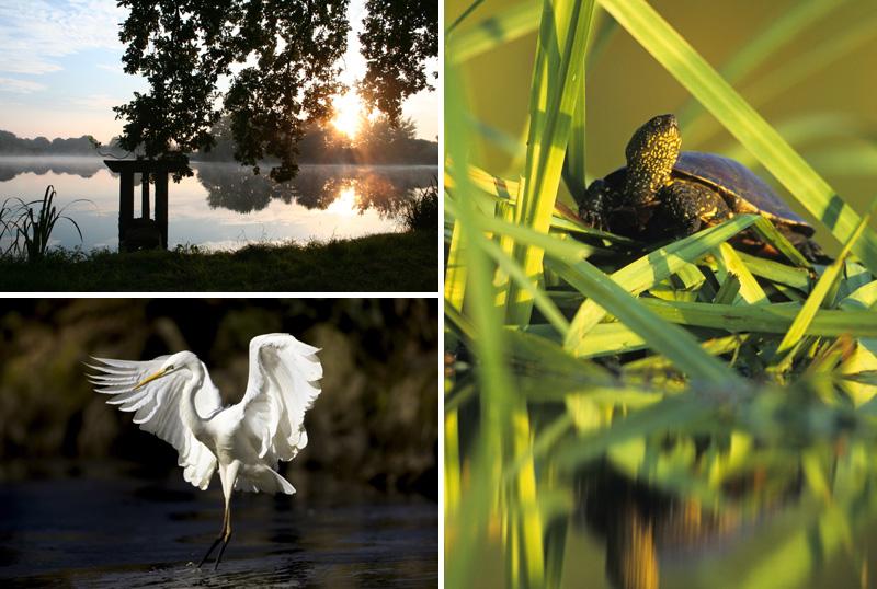 A gauche, étangs de Brenne et grande Aigrette ; A droite, cistude de Brenne - © HVI