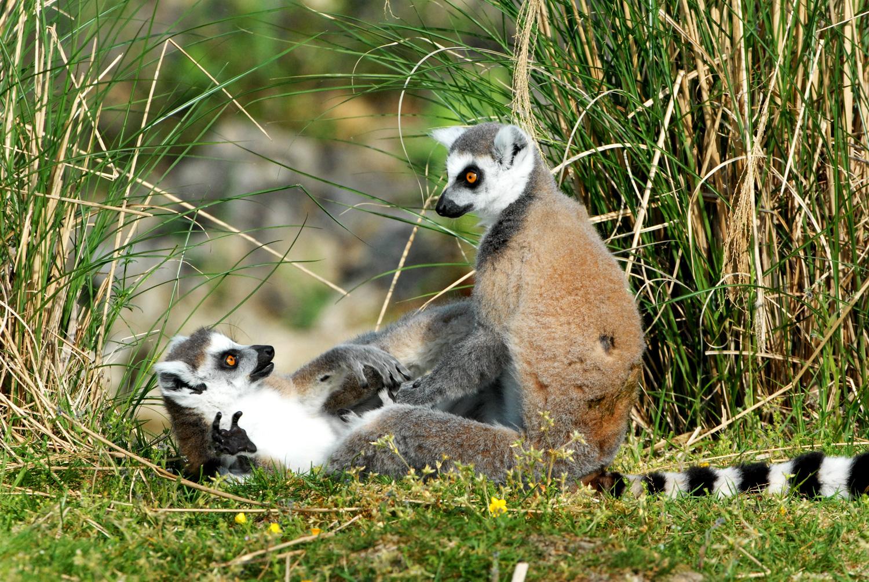 Parc naturel r gional de la brenne berry province for Zoo haute touche