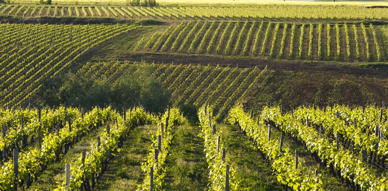 Le vignoble de Reuilly - © Hellio et Van Ingen