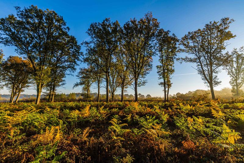 Forêt du Poinçonnet - © Teddy Verneuil