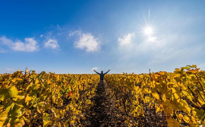 Le vignoble de Reuilly, à l'automne - © Teddy Verneuil