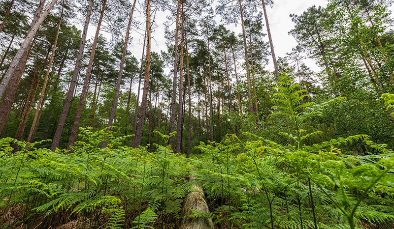 Forêt d'Allogny ©Teddy Verneuil