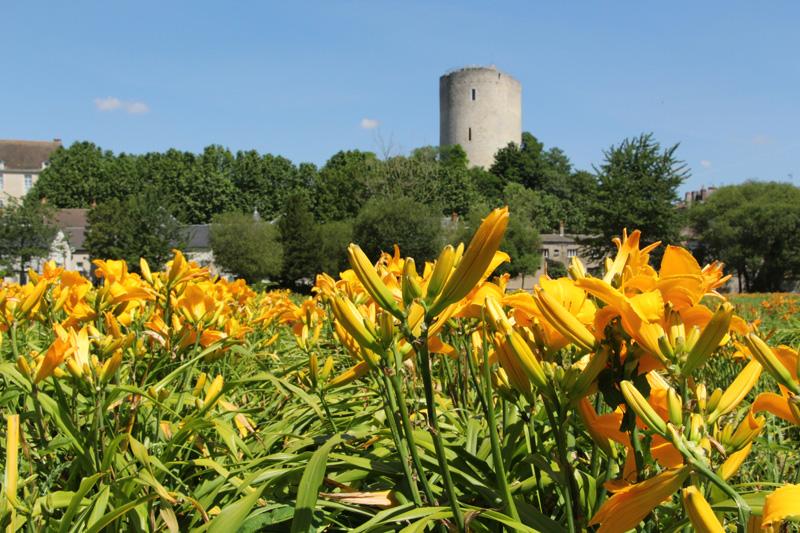 La Tour Blanche (Issoudun) vue depuis les bords de la Théols - © S. Pascal Mousselard