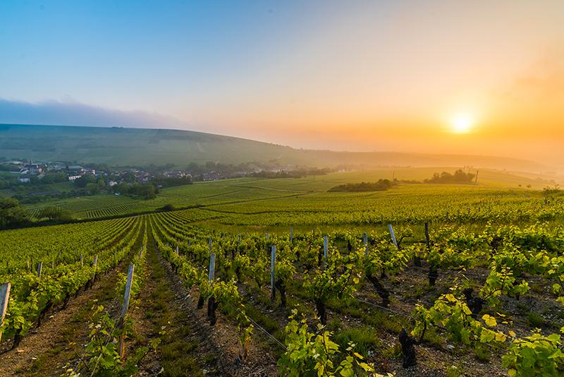 Vignoble de Sancerre ©Teddy Verneuil