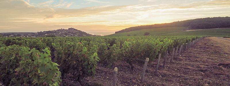 Vignoble de Sancerre ©Ad2T - E. Luciani