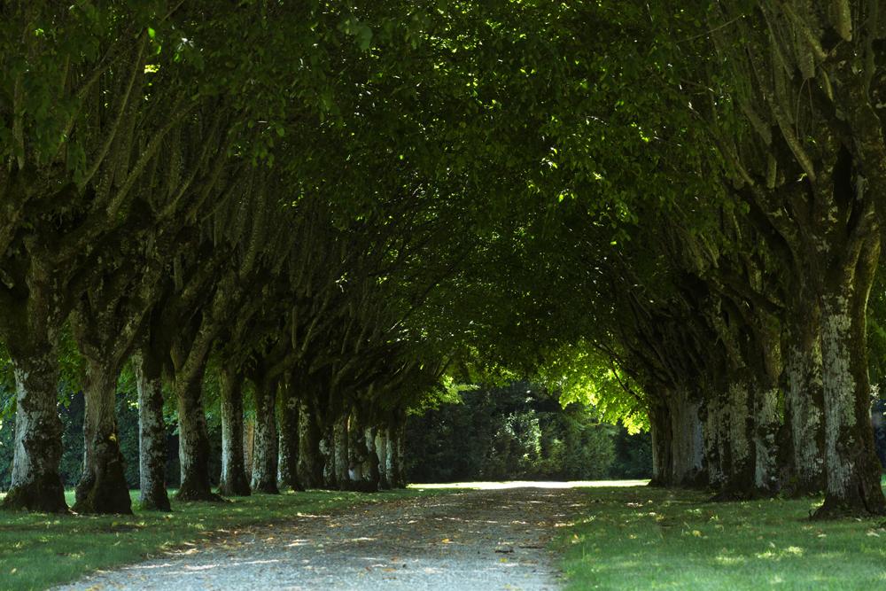 Parc paysager - Château Azay-le-Ferron - © Hellio et Van Ingen