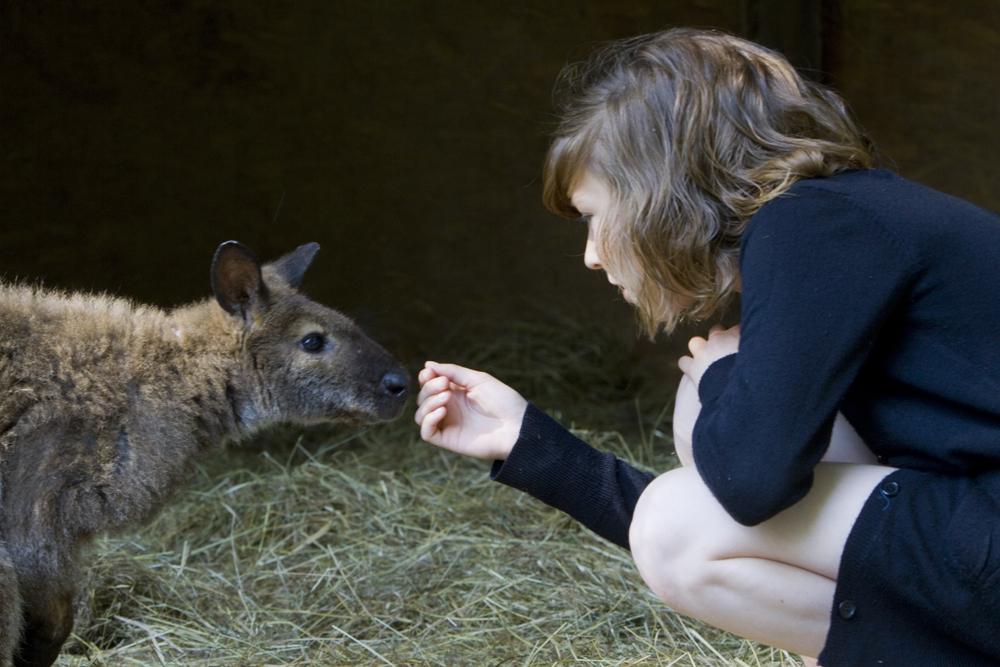 Réserve zoologique de la Haute-Touche - © Hellio et Van Ingen