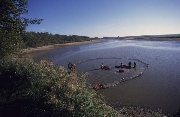 Pêche d'étang - © Hellio et Van Ingen