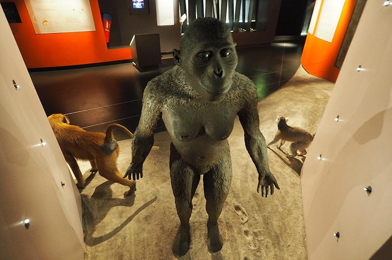 Hominidés au Muséum de Bourges ©Ad2T - V. Laebens