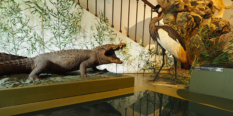 Muséum d'Histoire Naturelle de Bourges ©Ad2T - V. Laebens