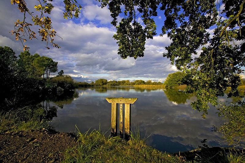 Bonde d'étang © Hellio et Van Ingen