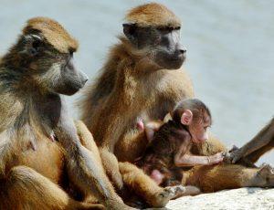 Le rocher aux singes © G. Proust