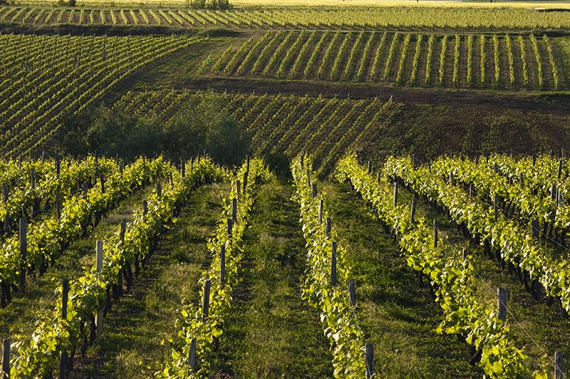 Vignoble de Reuilly - ©Hellio et Van Ingen