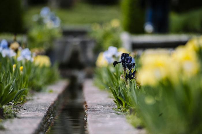 Les fleurs des jardins et de l'arboretum du Domaine de Poulaines. France, Région Centre-Val de Loire, Berry, Indre.
