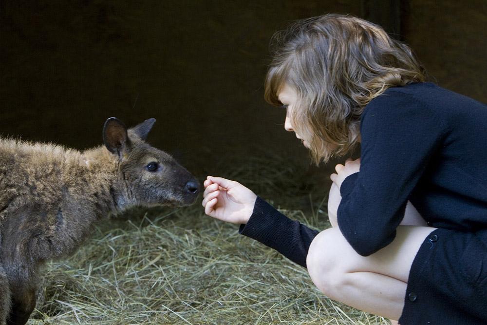 Réserve Zoologique de la Haute-Touche © Hellio et Van Ingen