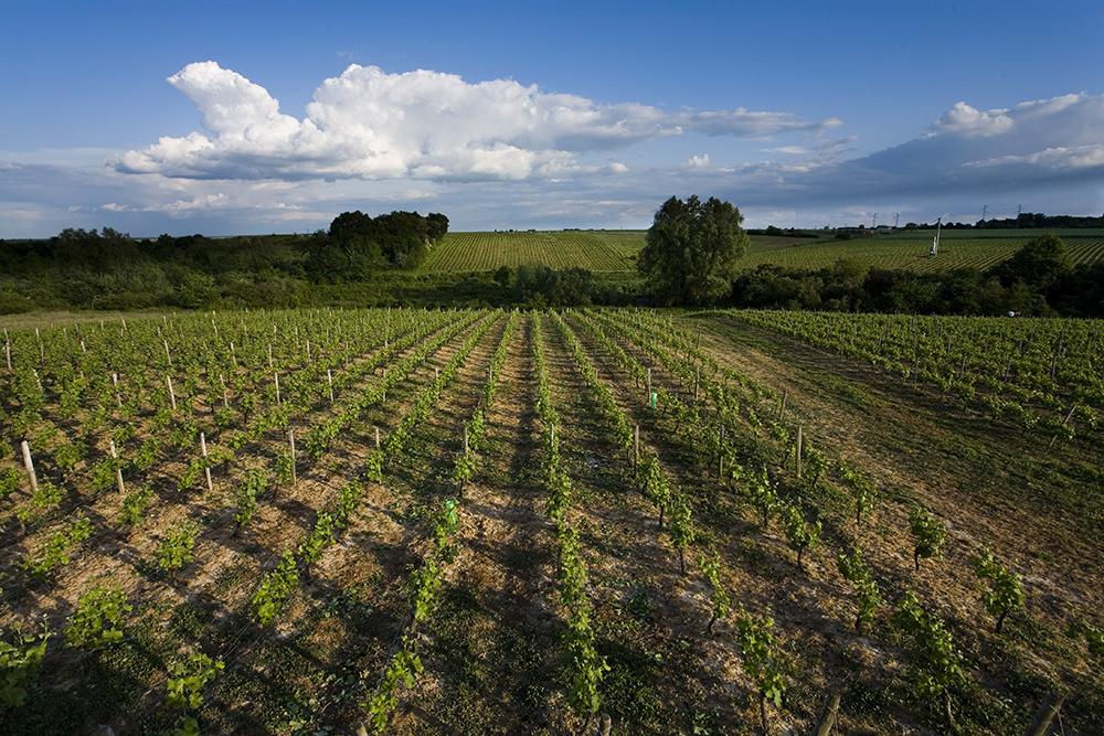 Vignoble de Reuilly © Hellio et Van Ingen