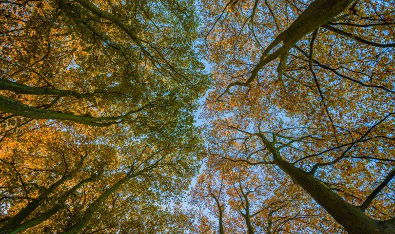 Bourges en automne