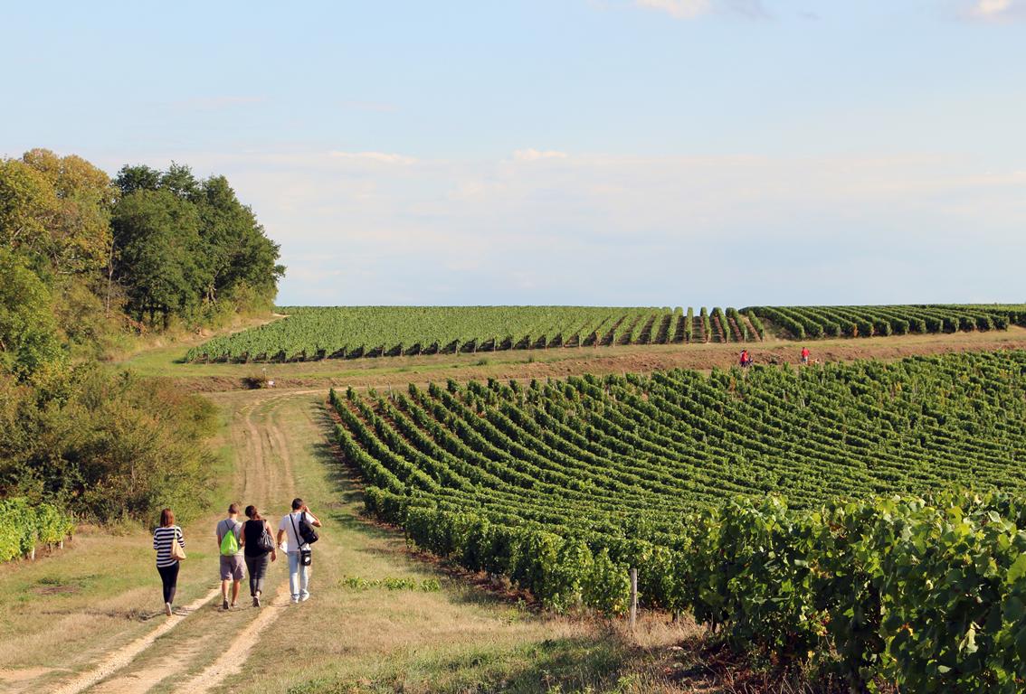 randonnée en vignobles de Reuilly ©ADTI