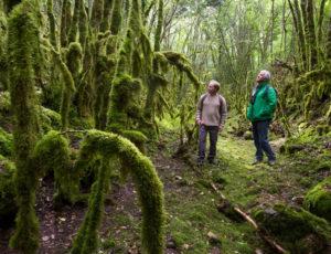 Visite au pays des sarcophages – Dans le chemin des mousses