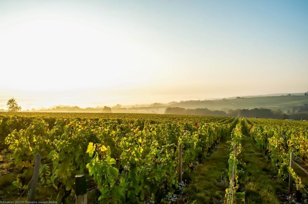 route des vignobles en coeur de france  u00e0 sancerre - itin u00e9raires touristiques