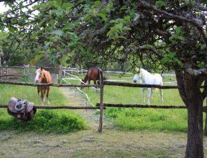 2012-05-accueil-presse-cheval-Figaro-mag-cc154