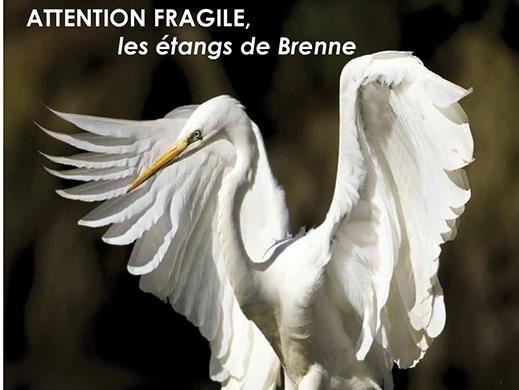 affiche attention fragile