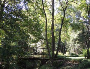 Jardins de Poulaines-jardin de Bambous