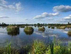 Voyage entre les étangs et le canal des cinq bondes – Etang