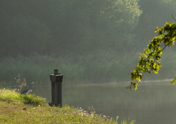 Voyage entre les étangs et le canal des cinq bondes – Bonde et héron cendré