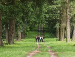Du parc à la forêt – L'allée des Cèdres