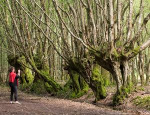 Du parc à la forêt – Arbres têtards