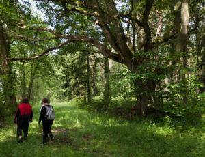 Du parc à la forêt