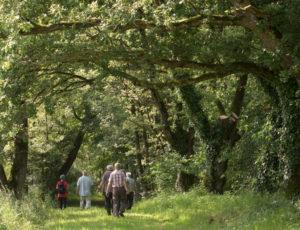 Une église romane entre Boischaut et Brenne – A l'ombre des chênes