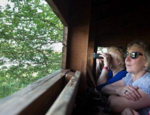 Horizon de nénuphars – Dans l'observatoire