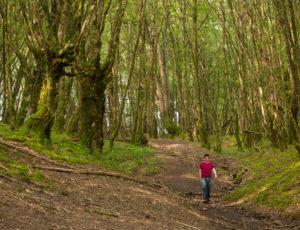 La vallée de l'Abloux et ses forges – En sosu bois