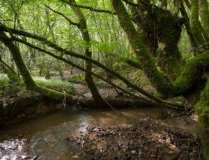 La vallée de l'Abloux et ses forges – Au bord de la Rivaille