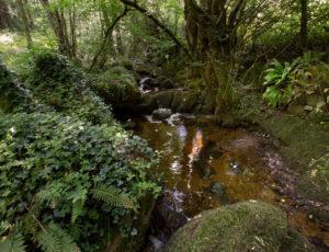 La vallée de la Benaize – Cours d'eau en bord de chemin