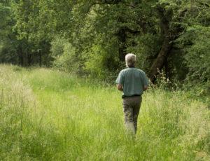 Les étangs au fil des bouchures – Dans les chemins