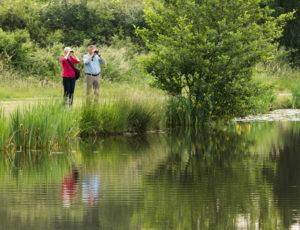 Les étangs au fil des bouchures – Observation en bord d'étang