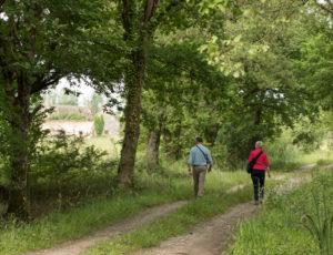 Les étangs au fil des bouchures – Sur les chemins