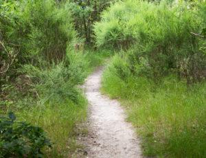 Rencontre avec les paysages de Brenne – Accès à l'observatoire de l'étang Massé