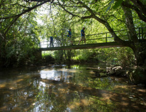 La vallée du Salleron – Sur la passerelle