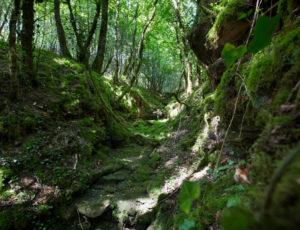 La vallée du Salleron – Fossé