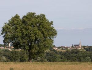 La balade du colombier – Vue au loin sur le bourg de Lureuil