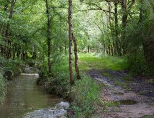 Histoire de Brenne – Le Rossignaol
