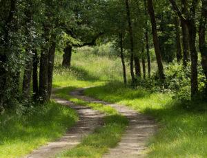 Aux portes de la Brenne – Par les chemins
