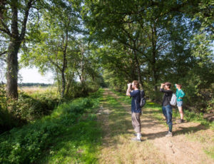 Etangs, forêts et buttons – Observation en bord d'étang