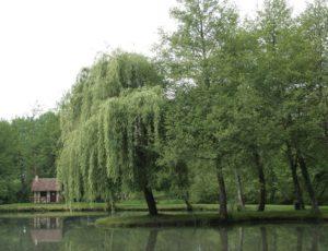Base de Loisirs de Badineau – Extérieur