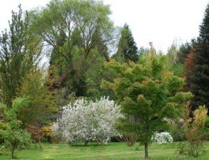 arboretumadeline